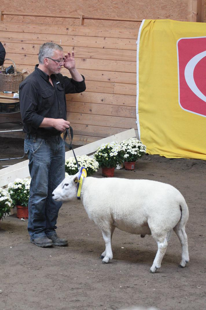 Best in Show Poel-Texel